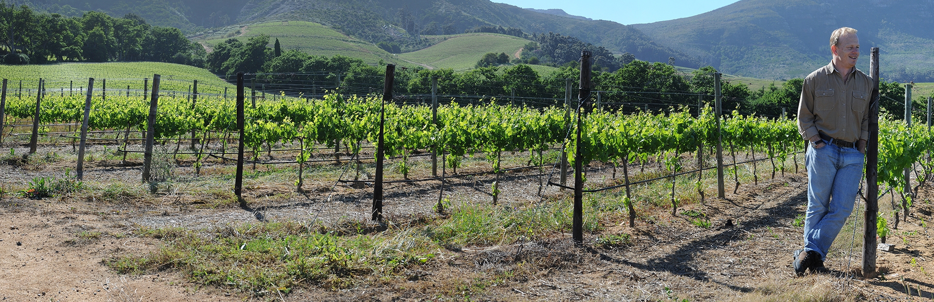 Cape Town audio tour: Vineyard Audio Guide: Deep Roots and Trade Routes