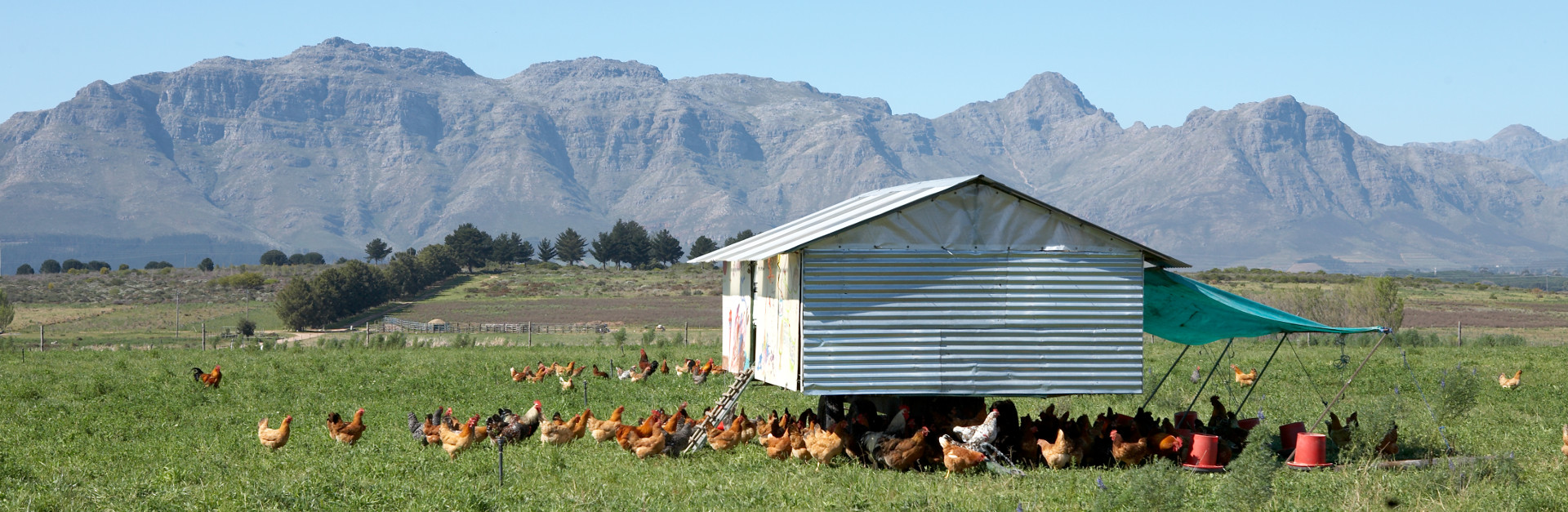 Cape Winelands audio tour: Walk The Spier Farm: Wine Tasting Room