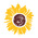 Johnson county library   sunflower logo