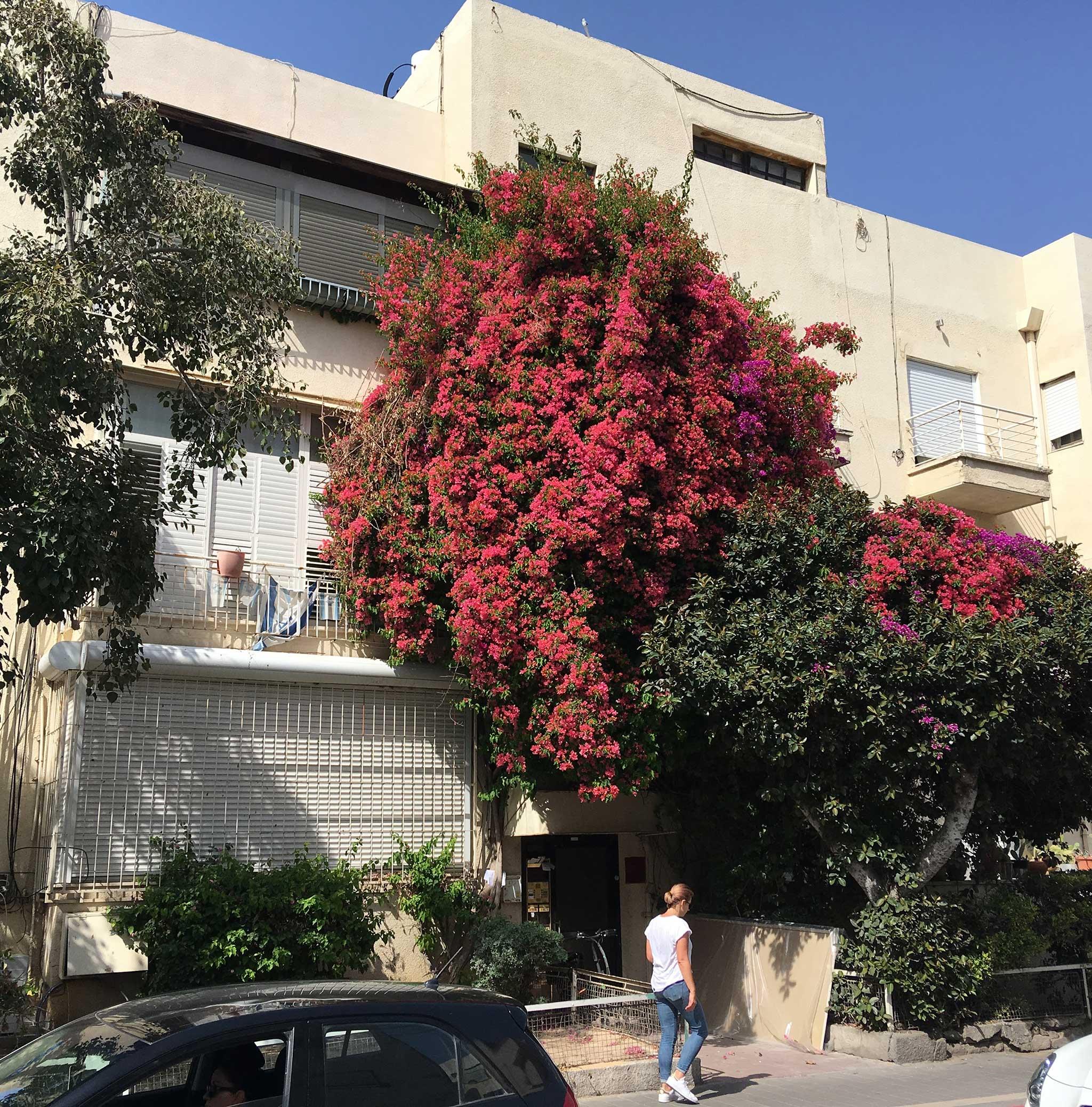 To Frug Street on Tel Aviv audio tour The White City