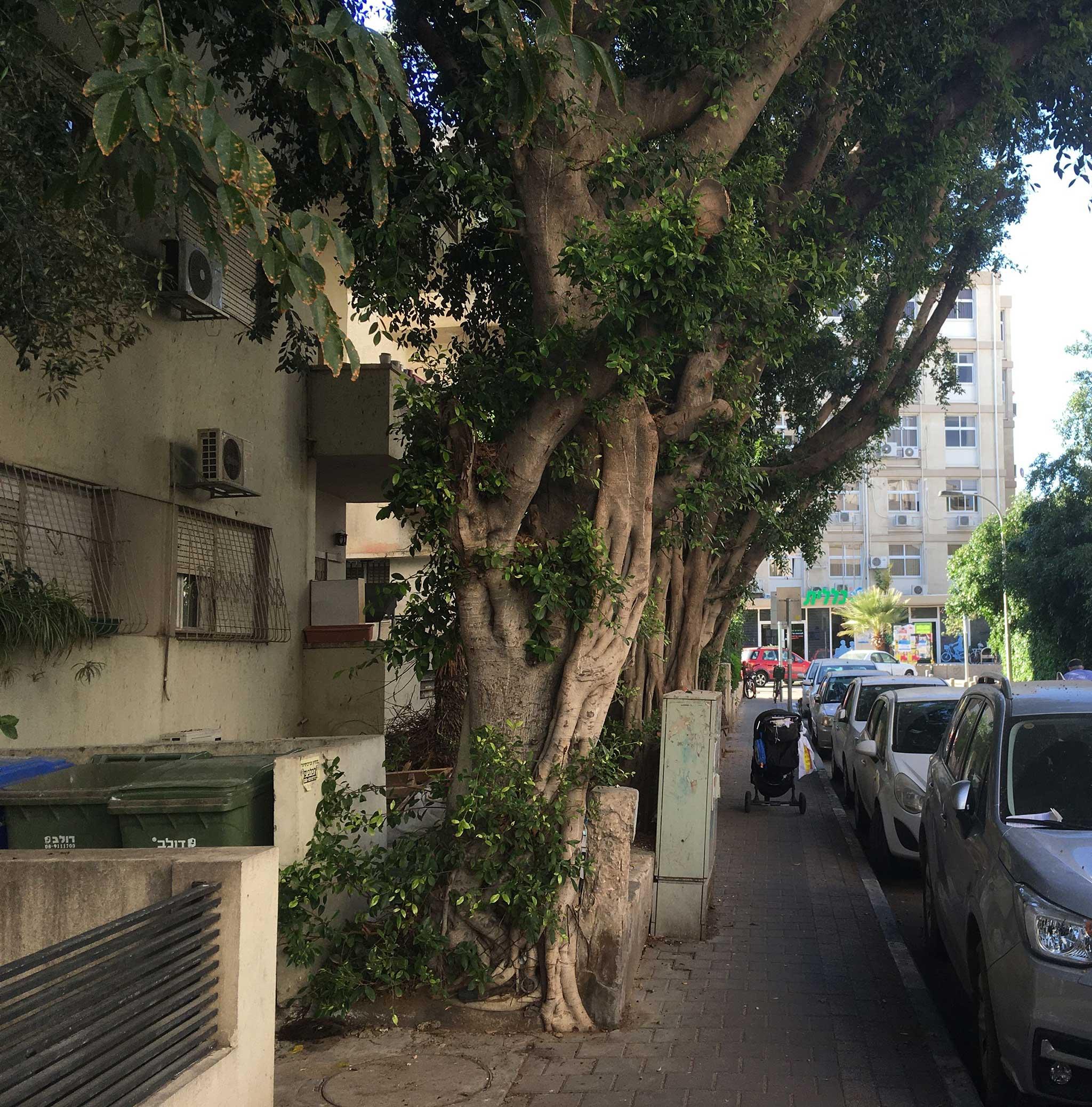 Gnesin Street on Tel Aviv audio tour The White City
