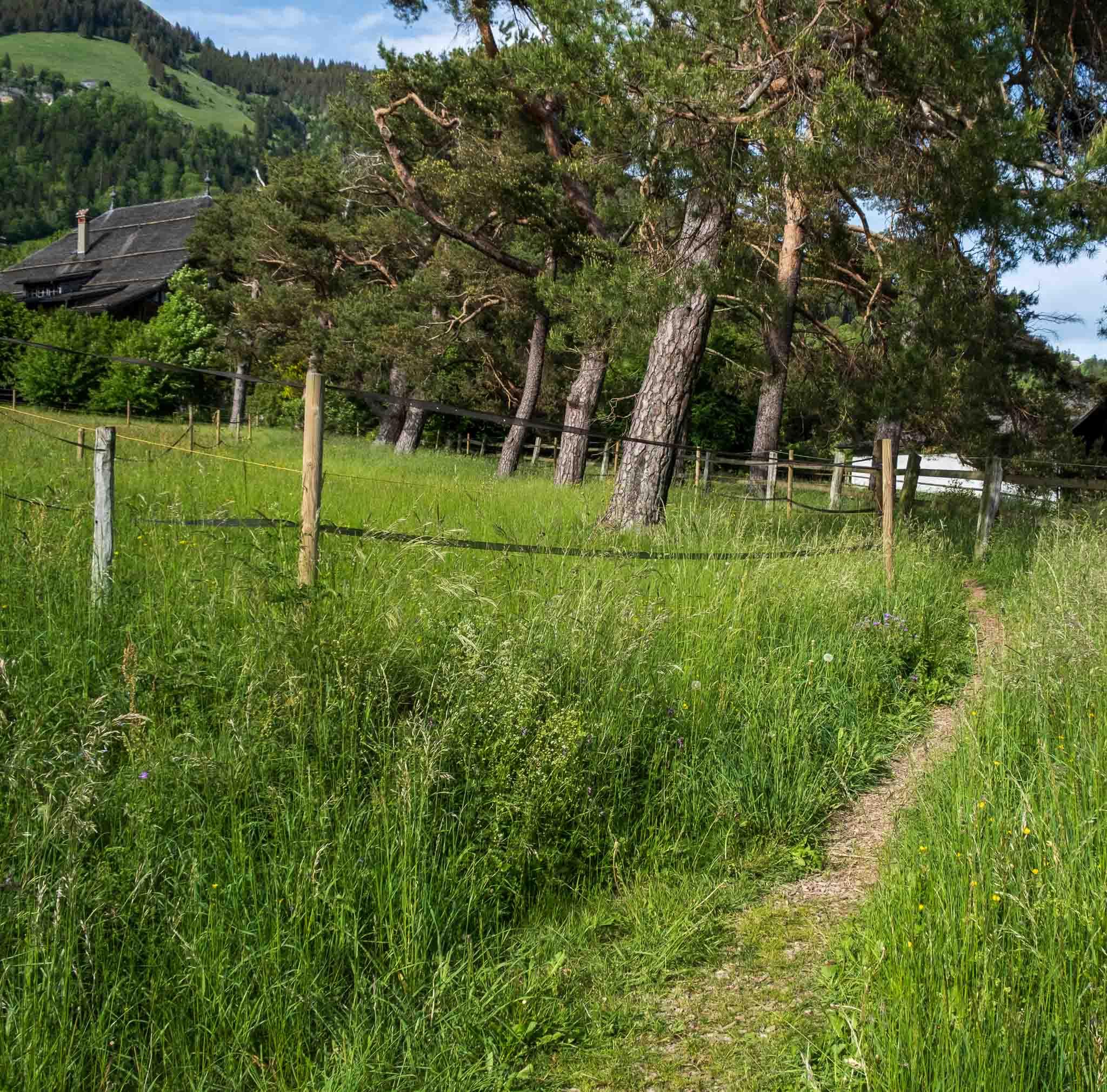 Path to the Grand Chalet on Rossinière audio tour Cowbells, Chalets and Balthus: A Swiss Alpine Village Excursion
